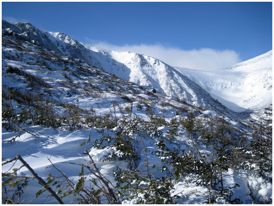 Winter snow and brush, Tuckermans Ravine, White Mountains, New Hampshire